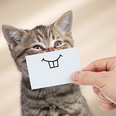 Lustiges Kätzchen